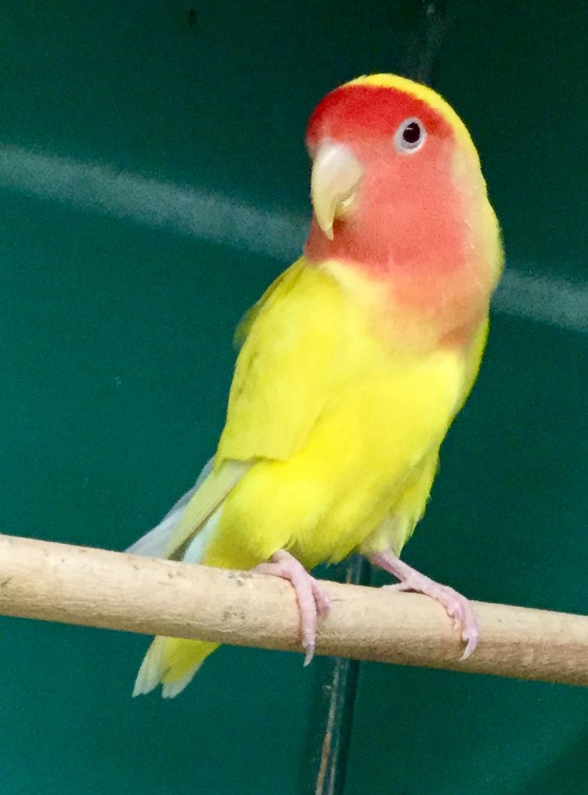 Birds Zimmers Pets