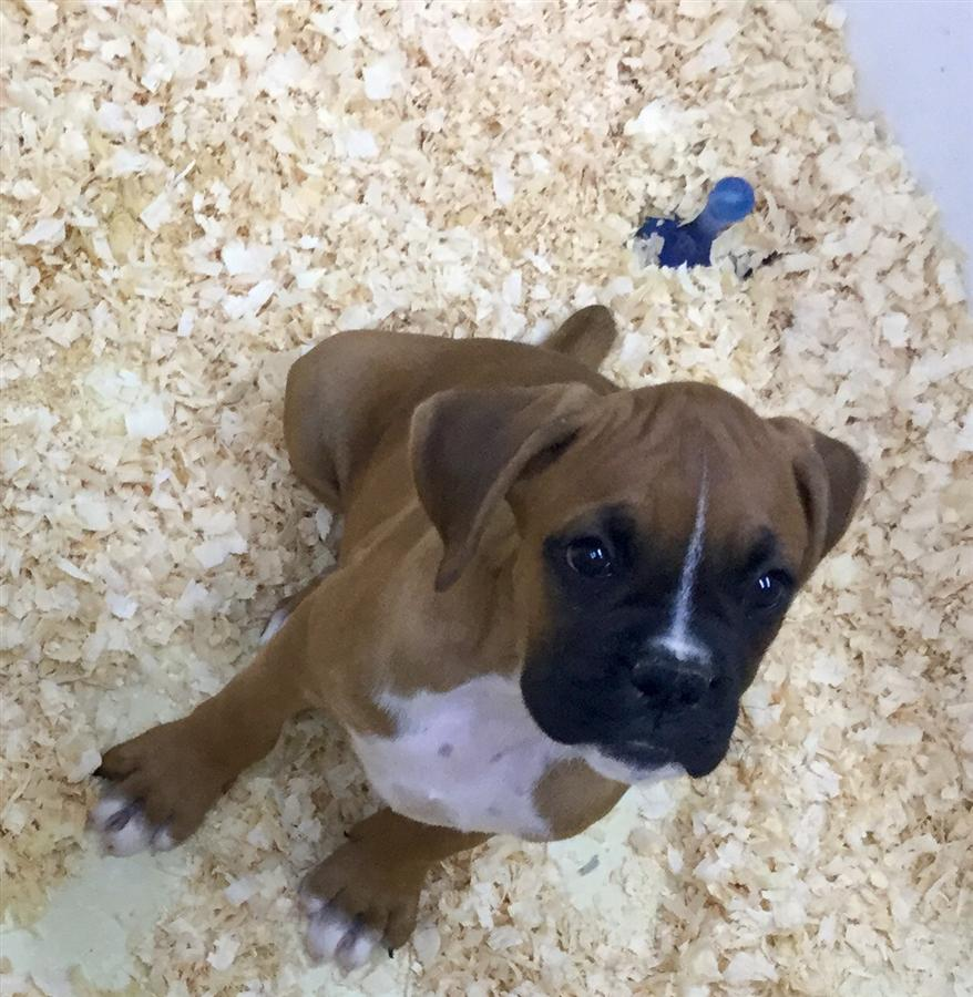 Puppies - Zimmers Pets